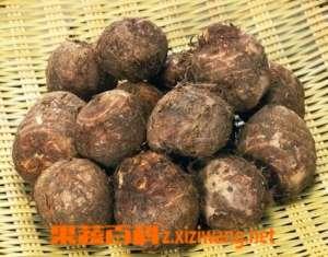 毛芋头的功效与作用 吃毛芋的营养价值